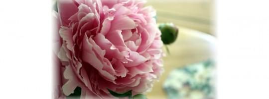 Ωροσκόπιο Λουλουδιών – Παιονία
