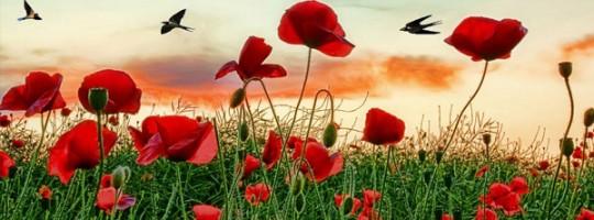 Ωροσκόπιο Λουλουδιών – Παπαρούνα